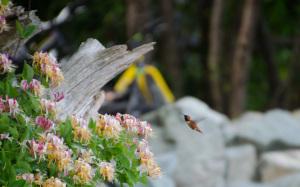 Kolibri an einem Strauch