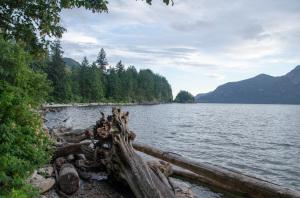 Treibholz in der Porteau Cove